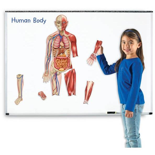 Learning Resources Corpul uman - set magnetic